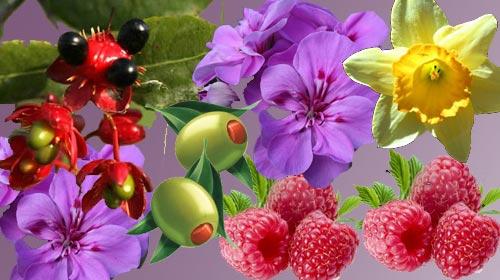 Hangi Bitki Hangi Hastalığa Yarar?