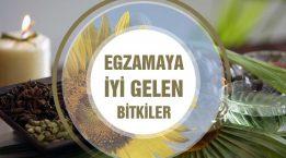 Egzama