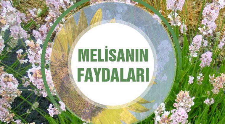 Melisa Bitkisinin Faydaları